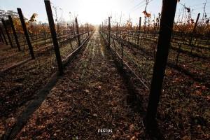 festus-reyneke-05